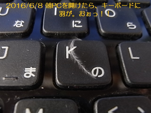 2016/06/08開けた時PCにいた天使の羽