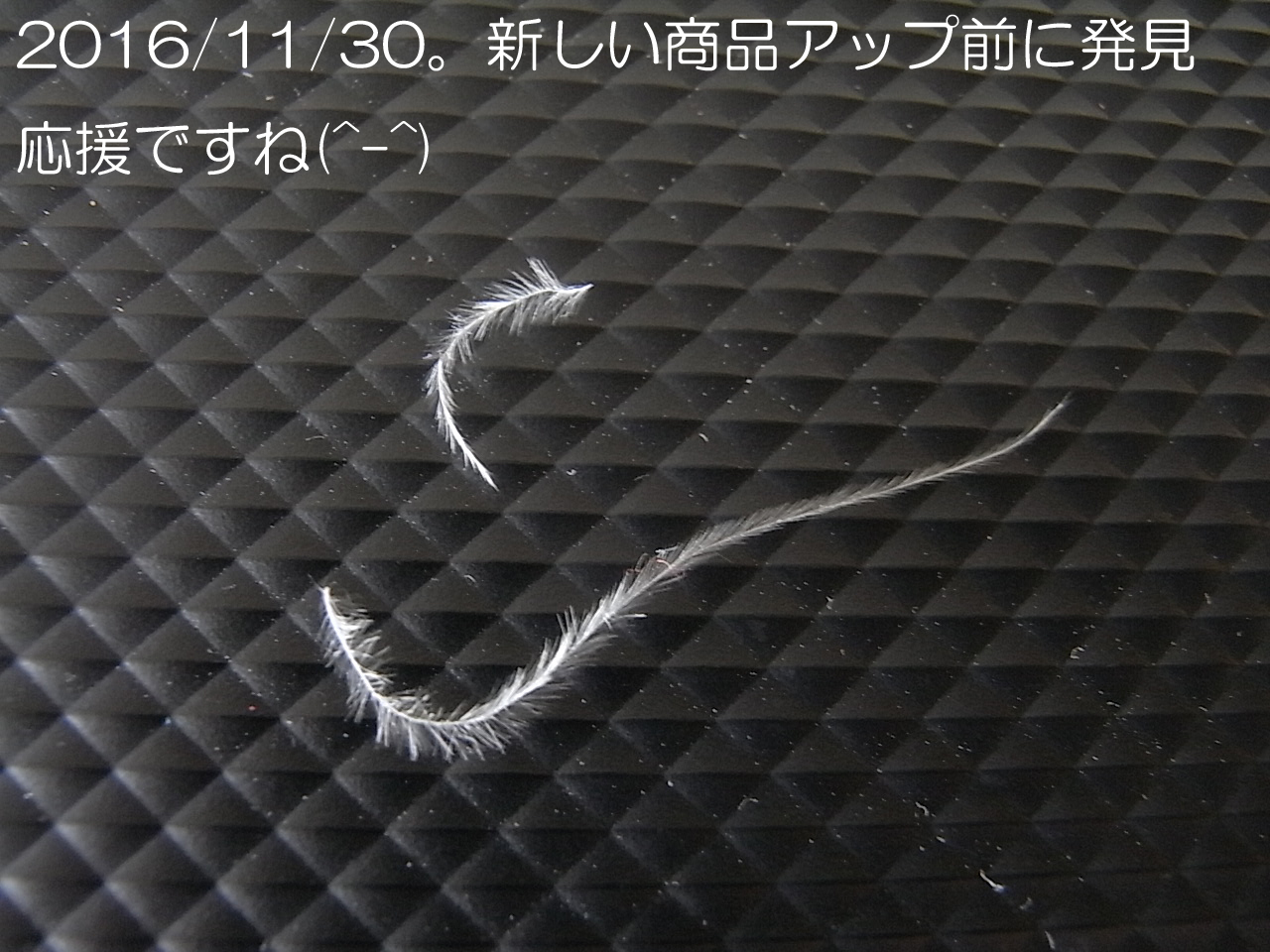 天使の羽2016/11/30