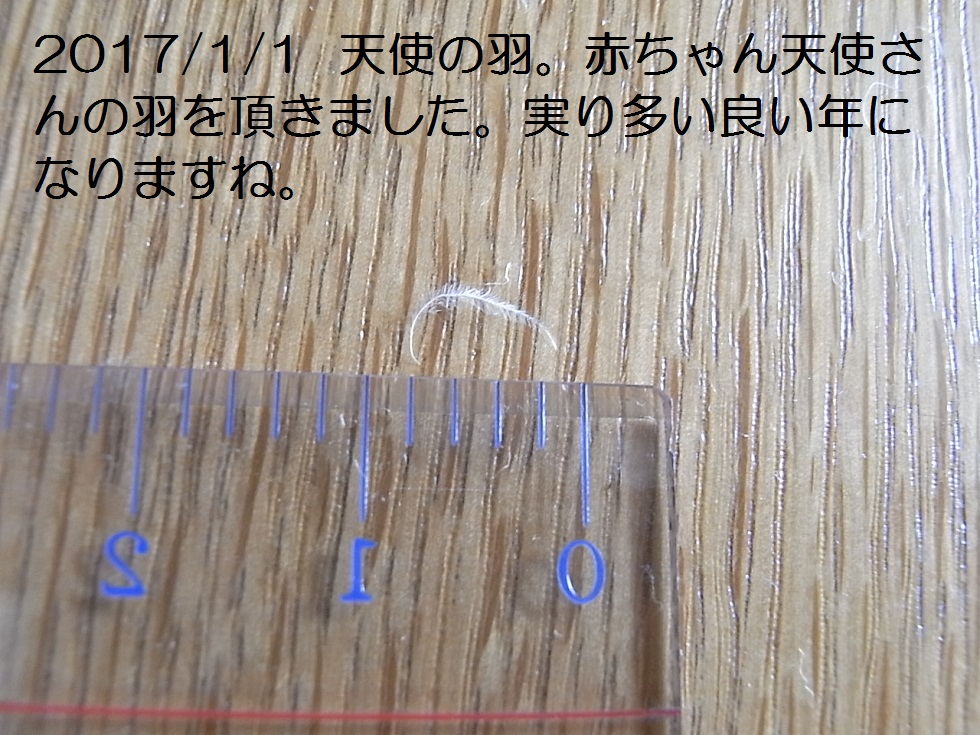 2017/01/01今年最初の天使の羽:赤ちゃん天使さん