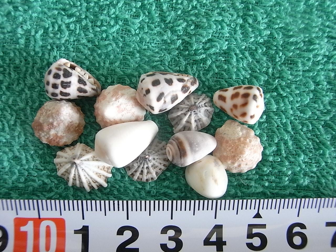 1~1.5mm貝ガラ達